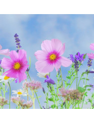 Sjeme cvijeća i aroma