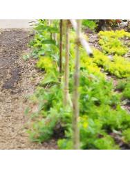 Sementi da orto